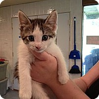 Adopt A Pet :: Zeva - Byron Center, MI