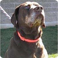 Adopt A Pet :: Cindy - Warren, NJ