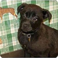 Adopt A Pet :: Ketty - Racine, WI