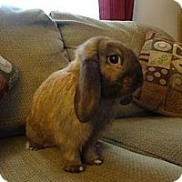 Adopt A Pet :: Winston - Pittsburgh, PA