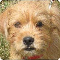 Adopt A Pet :: ROBIE - Parsons, TN