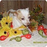 Adopt A Pet :: Sugar - Chandlersville, OH