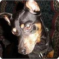 Adopt A Pet :: Cooper - Seymour, CT