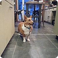 Adopt A Pet :: Yoli - Freeport, NY