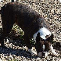 Adopt A Pet :: Hardy - Prole, IA
