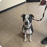 Adopt A Pet :: CHUCK - Marion, OH