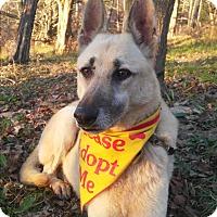 Adopt A Pet :: LuLu - Louisville, KY