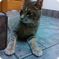 Adopt A Pet :: angela - Muskegon, MI