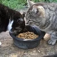 Adopt A Pet :: Rosie - Walnut Creek, CA