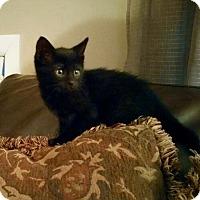 Adopt A Pet :: Keanu - River Edge, NJ