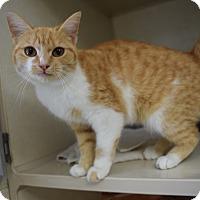 Adopt A Pet :: Sally Jessie Rapheal - Bucyrus, OH