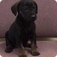 Adopt A Pet :: Aldan - Buffalo, WY
