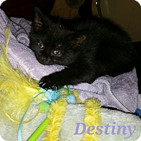 Adopt A Pet :: Destiny - Great Mills, MD