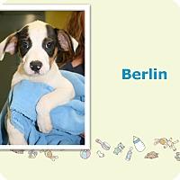 Adopt A Pet :: Berlin - Tampa, FL