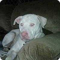 Adopt A Pet :: Jackson - Aurora, OH