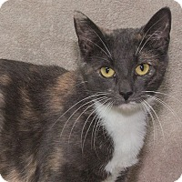Adopt A Pet :: Cammi - Elmwood Park, NJ