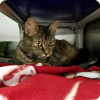 Adopt A Pet :: Mona Lisa - Elyria, OH