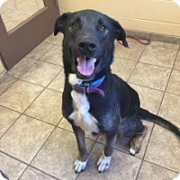 Adopt A Pet :: Bubby 110789 - Joplin, MO