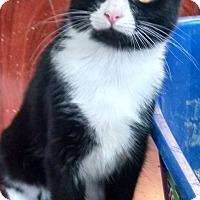 Adopt A Pet :: Kanga - Morganton, NC