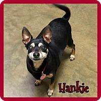 Adopt A Pet :: Hanky - Jasper, IN