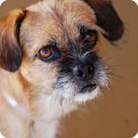 Adopt A Pet :: Biscuit - Toccoa, GA