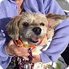 Adopt A Pet :: Mia - Sweetest Girl