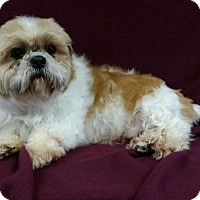 Adopt A Pet :: Bellamy Miller - Urbana, OH