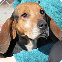Adopt A Pet :: Shiloh - Windsor, VA