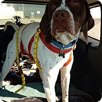 Adopt A Pet :: Dale- Foster Home Needed - Wood Dale, IL