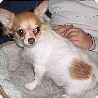 Adopt A Pet :: Tyra - Rigaud, QC
