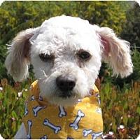 Adopt A Pet :: Rigby - Encinitas, CA