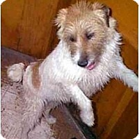 Adopt A Pet :: JUMPING JANE(JJ) - dewey, AZ