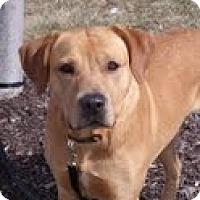 Adopt A Pet :: Kirkland - Lewisville, IN