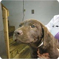 Adopt A Pet :: Kate - Cumming, GA