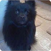 Adopt A Pet :: Calypso - Kingwood, TX