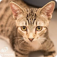 Adopt A Pet :: Rio - Fountain Hills, AZ