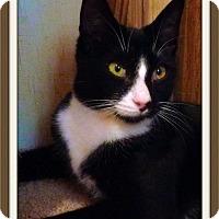 Adopt A Pet :: Dean Martin - McDonough, GA