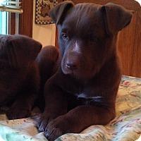 Adopt A Pet :: Holly - Warrenton, NC