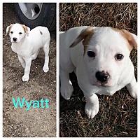 Adopt A Pet :: Wyatt - Chicago, IL