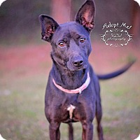 Adopt A Pet :: Binky - Fort Valley, GA