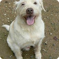 Adopt A Pet :: Jumper - Spartanburg, SC