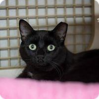 Adopt A Pet :: Heidi - Albuquerque, NM