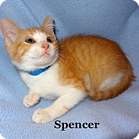 Adopt A Pet :: Spencer - Bentonville, AR