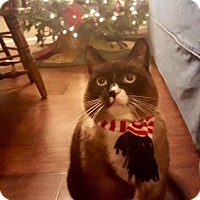 Adopt A Pet :: Cocoa - Eagan, MN