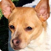 Adopt A Pet :: GIGI(OUR LITTLE