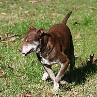 Adopt A Pet :: Ralphie - Gillsville, GA