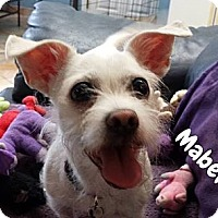 Terrier (Unknown Type, Small) Mix Dog for adoption in San Juan Capistrano, California - Tula