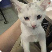 Adopt A Pet :: A588551 - Louisville, KY