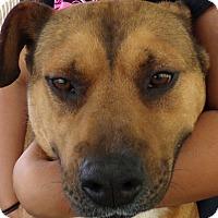 Adopt A Pet :: Jackson - Chula Vista, CA