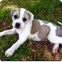 Adopt A Pet :: Patoka - Thompson's Station, TN